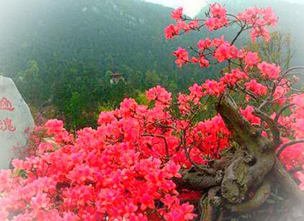 安庆映山红博览园拓展训练团建基地
